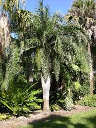 native desert plants fairchild tropical botanic garden u003e horticulture u003e fairchild plant