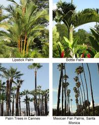 Decorative Trees In India All About Palm Trees A Photographic And Botanical Appreciation