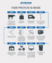 how is made how is whey protein made infographic