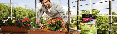 balkon grã npflanzen terrassen und balkonpflanzen infos hornbach