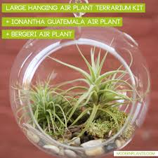 hanging air plant terrarium kit modern plants
