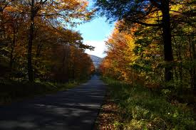West Virginia forest images File fall trees wv forest country road west virginia jpg