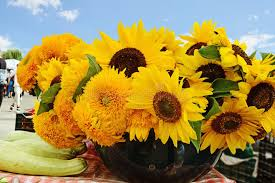 sunflowers for sale sunflowers for sale at the farmers market stock image image of