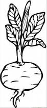 beetroot 8 coloring page free vegetables coloring pages