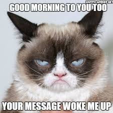 Good Morning Cat Meme - 15 good morning meme to him her friends happy wishes