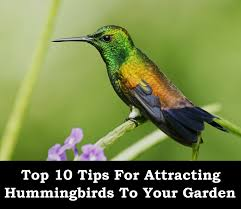 top 10 tips for attracting hummingbirds container gardening
