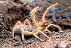Misunderstood Spider Meme 16 Pics - vwvortex com hey ot