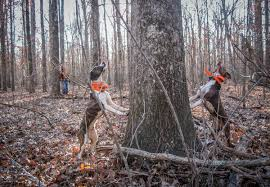 how to hunt squirrels with a dog small game hunting realtree