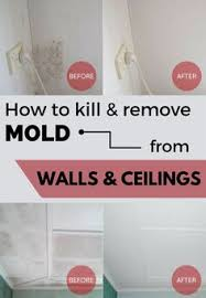 How To Get Rid Of Black Mold In Bathroom Mold Ugh Soooo Gross Here U0027s How To Kill It Forever Remove