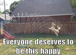 Be Happy Meme - everyone deserves to be this happy meme boomsbeat