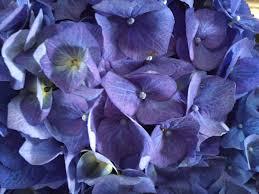 the natural bouquet naturalbouquet twitter