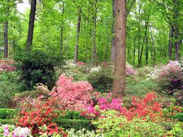 Trees Plants And Flowers - shade loving flowering plants for a woodland garden dengarden