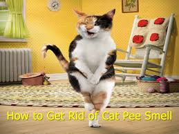 My Cat Peed On My Bed Tips How To Get Rid Of Cat Smell Youtube
