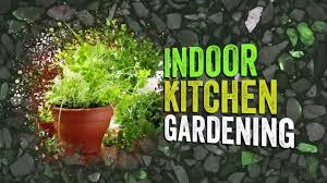 indoor kitchen gardening a growing trend youtube