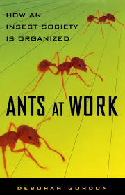 ants at work how an insect society is organized deborah gordon