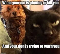 Funny Cat And Dog Memes - man s best friend imgflip
