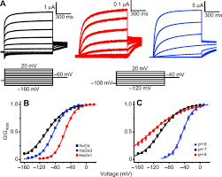 comparatif si e auto b ether à go go family voltage gated k channels evolved in an