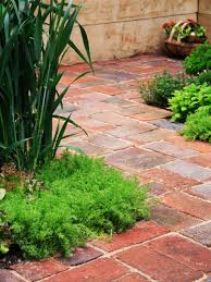 Backyard Plant Ideas How To Choose Materials For Garden Pathways Hgtv