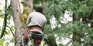 23 best boston tree service professionals expertise