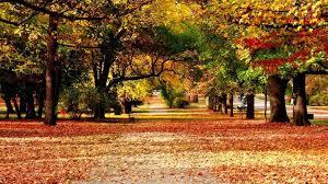 best scenery pictures hd wallpaper jpg 1600 900 scenery board