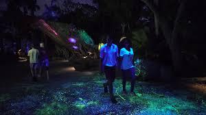 disney world halloween desktop background disney u0027s animal kingdom b roll bioluminescence on pandora u2013 the