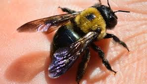 How To Get Rid Of A Beehive In Your Backyard How To Get Rid Of Bees U2013 Diy Solutions To Bee Proof Your Home