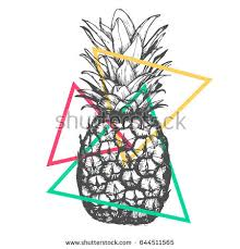vector hand drawn pineapple on white stock vector 644511565
