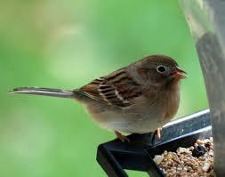 kathie u0027s birds feeder birds in massachusetts