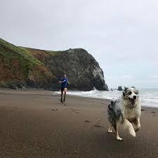 australian shepherd ultra marathon 443 best running images on pinterest fitness motivation running