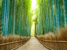 beautiful places 25 most beautiful places in japan condé nast traveler