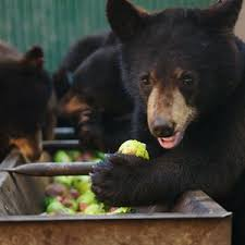 Animal Planet Documentary Grizzly Bears Full Documentaries - wild bear rescue watch online animal planet