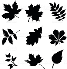 set of leaves vector black silhouettes stock vector art 491469266