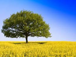 wallpaper tree in field