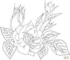 charisma yellow red floribunda rose coloring page free printable