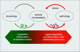 cell derived microparticles in the pathogenesis of cardiovascular