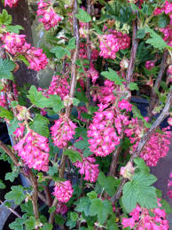 native plants california erosion control gardening tips for the santa cruz mountains