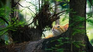 brown tree yellow kitten on brown trees free stock photo