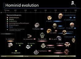 26 best evolution images on pinterest evolution human