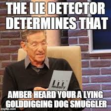 Amber Meme - maury lie detector meme imgflip