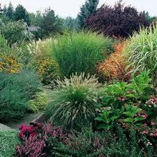 garden with ornamental grasses and perennials plants caring tips