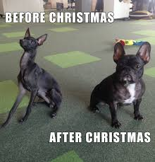 After Christmas Meme - before christmas after christmas explained by dogs imgur
