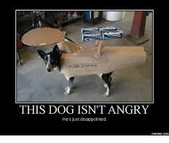 Disappointed Dog Meme - uss enterprise this dog isn t angry he s just disappointed memescom