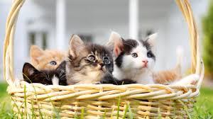 a basket of beautiful kittens by bing amazing photography 6