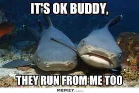 Funny Shark Meme - shark memes funny shark pictures memey com funny stuff