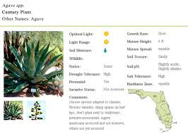 native florida plants low maintenance century plant florida native plants archinology