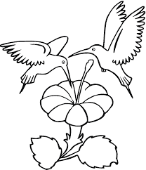 crafty inspiration ideas hummingbird coloring pages printable