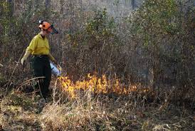 prairie oak ecosystems of the why prescribed fire is beneficial to the health of your forest