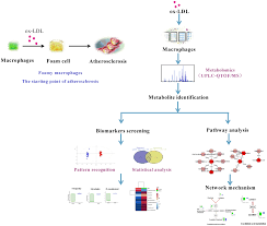 frontiers global metabolomics reveals the metabolic dysfunction