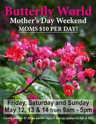mother u0027s day weekend u2013 butterfly world
