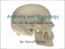 anatomy and physiology bio 110 lab quiz study guide anatomy